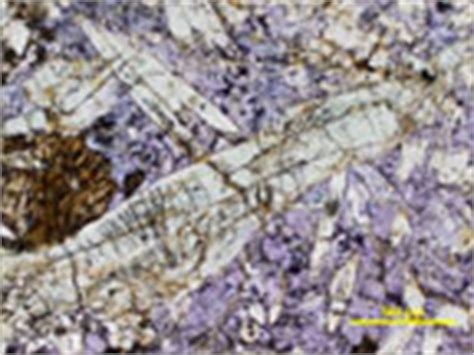 jadeite in thin section jadeite