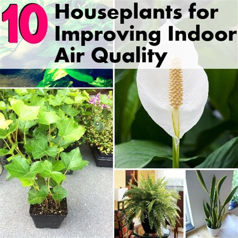 best houseplants for air quality top 10 houseplants for improving indoor air quality diy