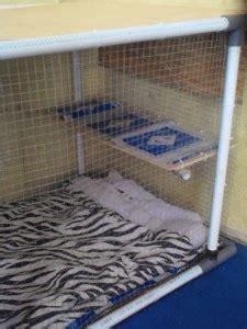Kandang Kucing Pipa panduan cara membuat kandang kucing keren sendiri hewan