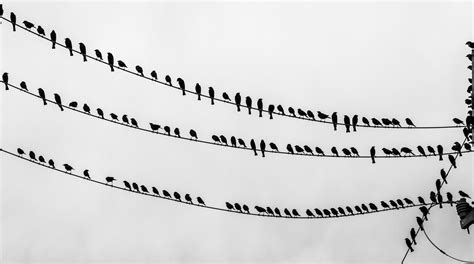 o the wire file birds on the wire jpg wikimedia commons