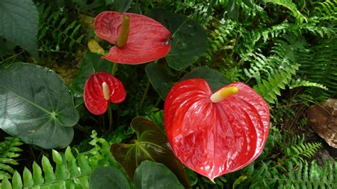 fiori portafortuna piante portafortuna da regalare a natale gesal it