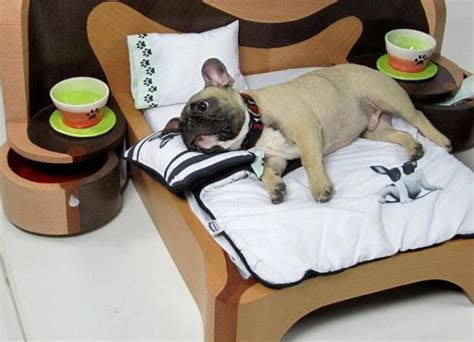 cool dog bed 21 cool furniture for pets