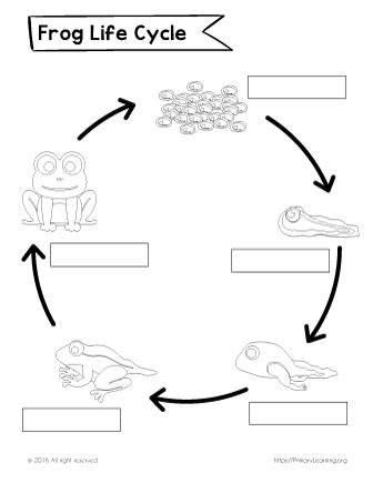 Cycle Of A Frog Worksheet by Label The Cycle Of The Frog Primarylearning Org
