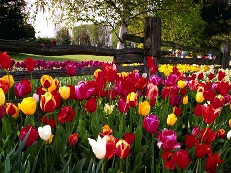 imagenes de paisajes florales flores