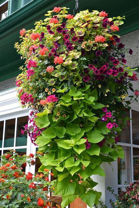 decorative garden hanging baskets best 25 hanging flower baskets ideas on pinterest