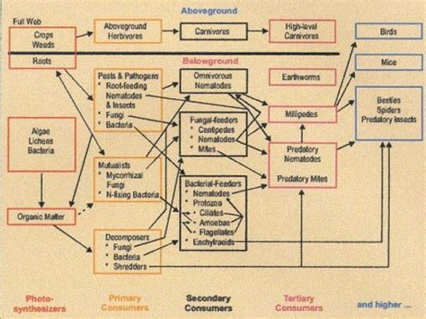 soil food web diagram soil food web diagrams vermigrow products