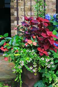 shade container garden part shade container combines both blooms and leaves for