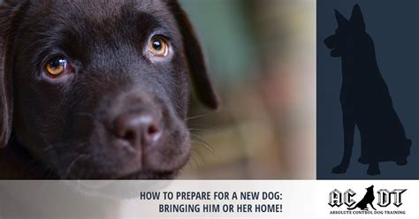 how to prepare for a new puppy puppy obedience medford bringing your new puppy home