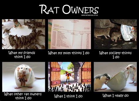 Rat Meme - rats sunshine scrapbook page 7