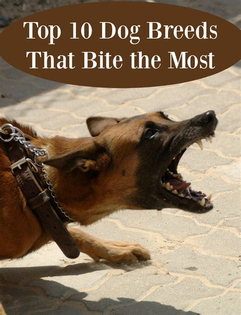 dogs that bite the most top 10 breeds that bite the most