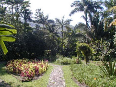 Botanical Gardens In Jamaica A Fe Me Page Dis Iyah Jamaica S Botanical Gardens