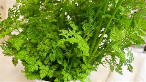 growing herb indoors 15 popular herbs to grow indoor plants expert