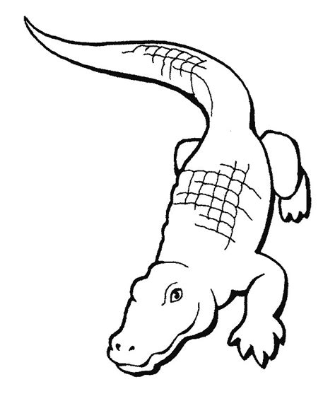 coloring sheet of alligator crocodile coloring pages to print