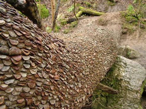 how much are real trees marvelous mystery of britain s money trees urbanist