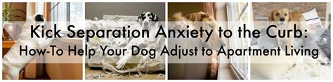 how to help a with separation anxiety how to help your with separation anxiety