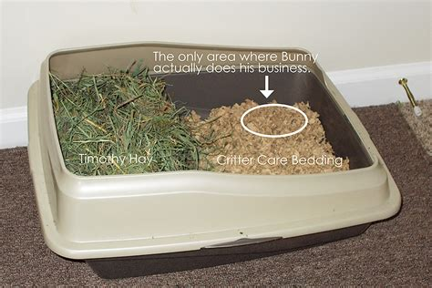 best bedding for rabbits litter box set up for rabbits what are the choices