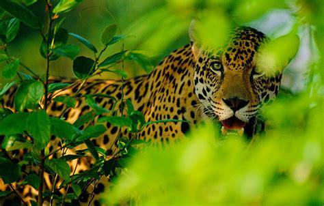 Amazonas Regenwald Pflanzen by Der Amazonas Regenwald Leben In Unz 228 Hligen Variationen