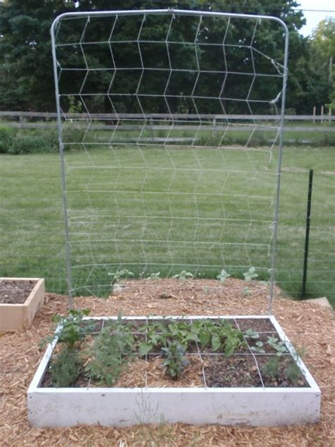 Trellis For Square Foot Garden using vertical space with a square foot garden trellis