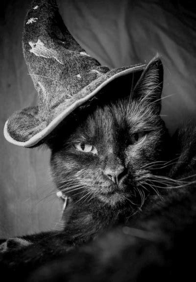 magic cat black cat magic elemental earth