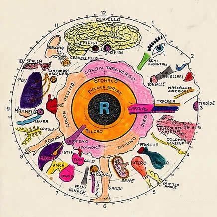 naturopatia e alimentazione alimentazione e naturopatia efoa