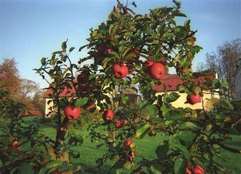 organic pest for fruit trees spray for fruit trees