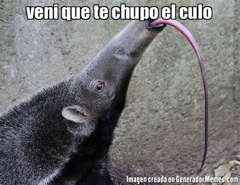 Anteater Meme Generator - anteater meme generator 28 images 1000 ideas about