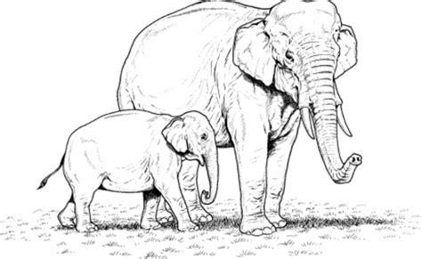 desain gambar gajah mewarnai binatang gajah untuk anak tk