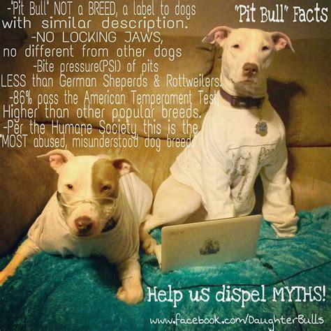 pitbull facts pit bull facts pit bull