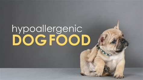 best food for dogs with allergies best food for allergies help for your hypoallergenic