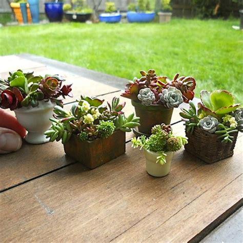 succulent container garden ideas ideas for succulent container gardens hgtv