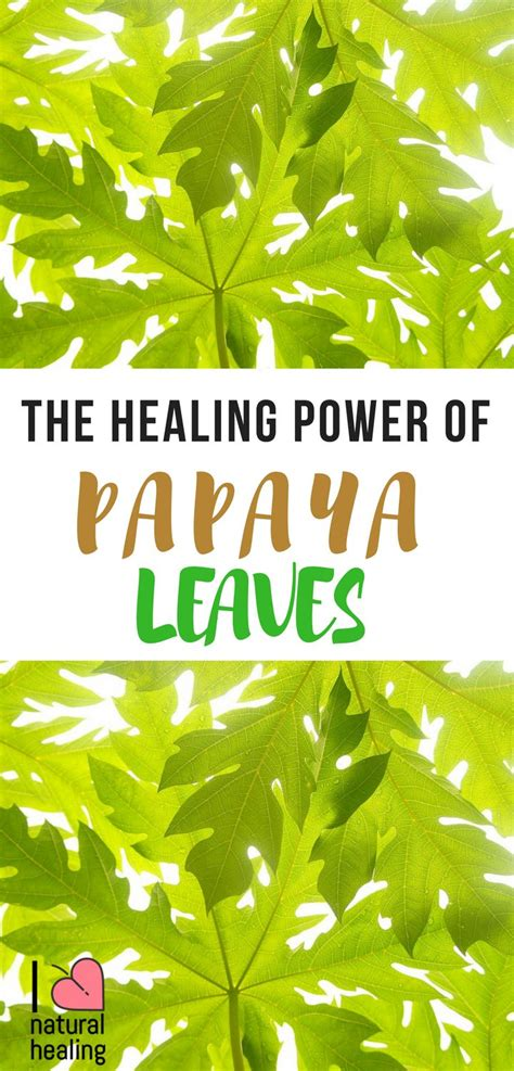 simply health harnessing the healing power of nature books 17 best ideas about ayurvedic herbs on