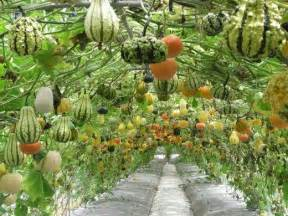 seattle s food forest aspires to provide free produce