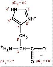 Histidine Protonation by Amino Acids Histidine