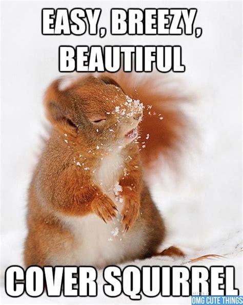 Cute Meme - animal memes omg cute things 082712 01 canada s leading