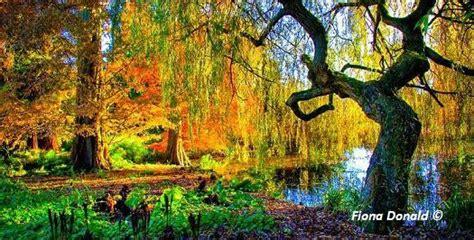 of cambridge botanic gardens cambridge botanic gardens and plaes to stay great
