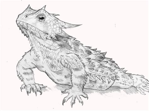 coloring page horned lizard horned lizard coloring download horned lizard coloring