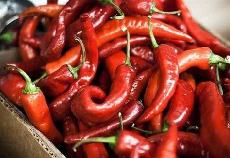 semina peperoncino in vaso coltivare peperoni e peperoncini coltivare orto come