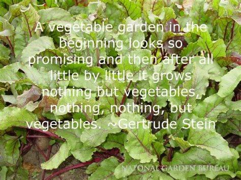 Vegetable Garden Quotes Quotes About Vegetable Gardens Quotesgram