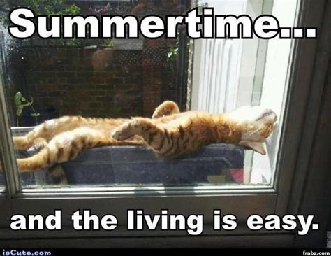 Funny Summer Memes - 95 best images about summer can t wait on pinterest