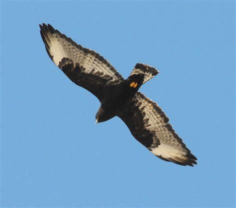 photo study of birds of prey 2013 2014 in pennsylvania