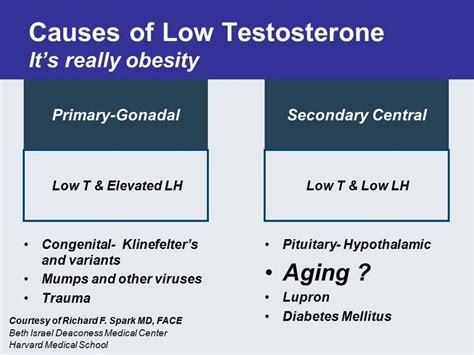 home remedies for low testosterone 28 images ppv