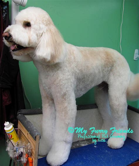 how to bathe a goldendoodle puppy grooming doodles grooming doodles