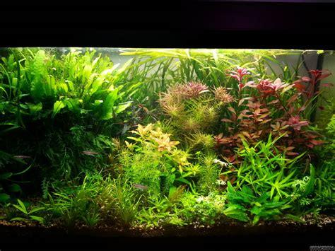 aquascape light calculator flowgrow aquascape aquarium database