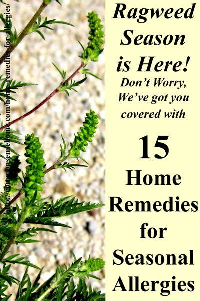 17 best ideas about allergy remedies on