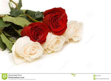 imagenes de flores rojas y blancas rosas rojas y blancas aisladas imagen de archivo imagen