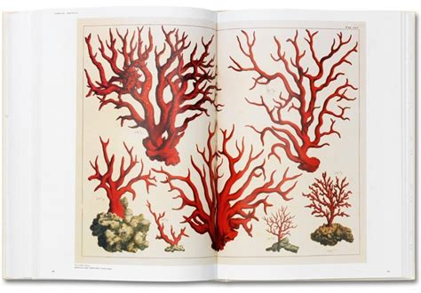seba cabinet of natural 9 best coral coral images on marine life planks and science illustration