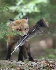 one fox animal naturally curious with