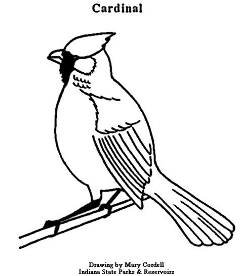 birds of indiana coloring pages image gallery indiana state bird drawing
