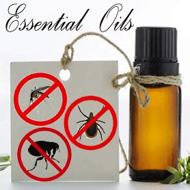 scents that repel bed bugs essential oils that repel bugs are you ready for summer