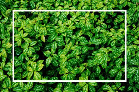 green leaves natural background wallpaper leaf texture